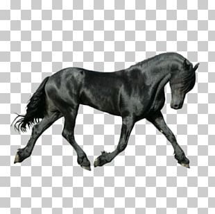 Friesian Horse On The Bit Canter And Gallop Iron-on PNG