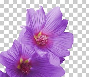 Hibiscus Adobe Premiere Elements Video Adobe Premiere Pro Wednesday PNG