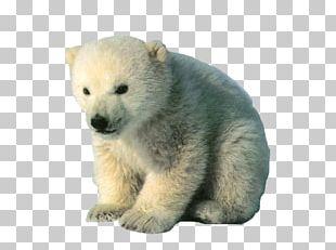 Polar Bear Arctic Fox Reindeer PNG