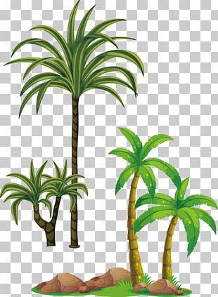Tree Arecaceae PNG