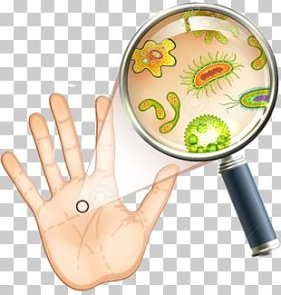 Bacteria Microorganism Microscope Cell Amoeba PNG
