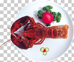 Lobster Crayfish As Food Seafood Palinurus Elephas PNG