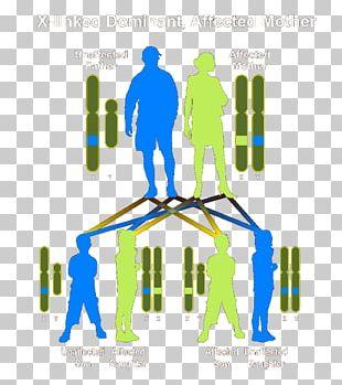 Dominance Genetic Disorder Genetics Heredity Autosómico Recesivo PNG