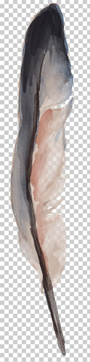 Watercolor Painting Feather Drawing PNG