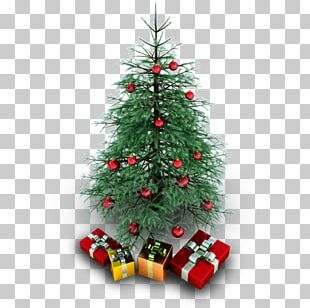 Fir Evergreen Christmas Decoration Pine Family Tree PNG