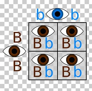 Punnett Square Dominance Eye Allele Genetics PNG