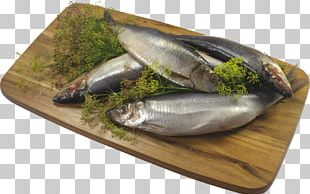 Sardine Kipper Fish Products Food PNG