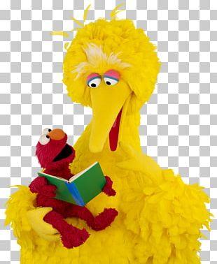 Big Bird Elmo Zoe Sesame Workshop Reading PNG
