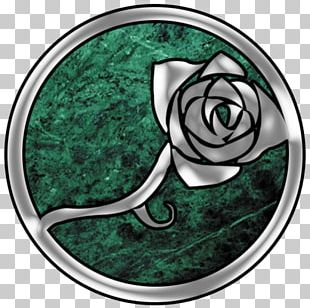 Rose Family Beach Rose Garden Roses Cabbage Rose Petal PNG