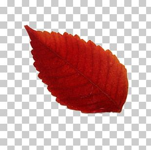 Maple Leaf Red Yellow PNG