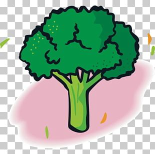 Vegetable Fruit Broccoli Food PNG