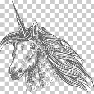 Horse Unicorn Sketch PNG
