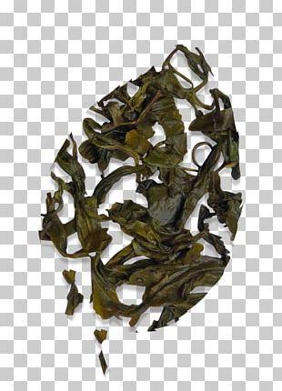 Nilgiri Tea Assam Tea Camellia Sinensis Oolong PNG