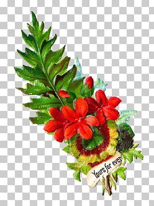 Cut Flowers Flower Bouquet Garden Roses PNG