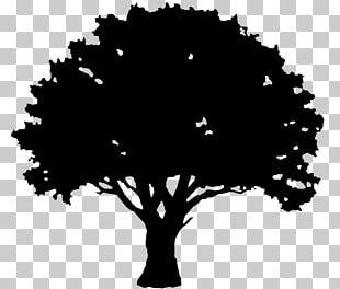 English Oak Tree Silhouette PNG