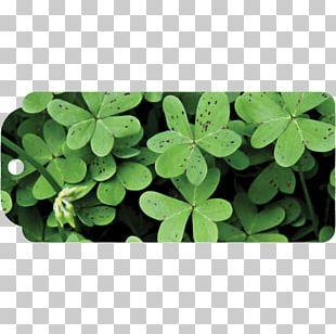 Shamrock Four-leaf Clover Saint Patrick's Day Luck PNG