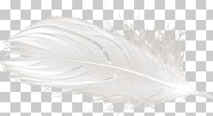White Feather Yandex Search PNG
