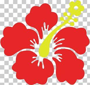 Flower Shoeblackplant Hawaiian Hibiscus Sticker PNG