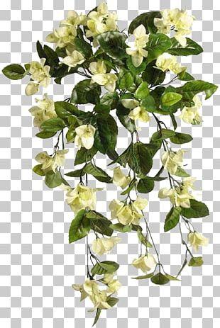Cut Flowers Plant Stem Flowering Plant PNG