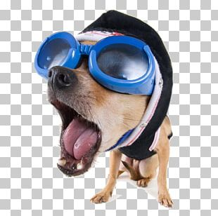 Dog Funny Animal Stock.xchng High-definition Video PNG