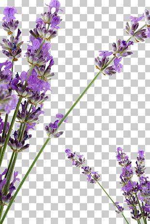 Lavender Petal Huocheng County Soap PNG