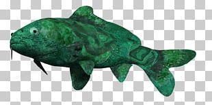Marine Biology Reptile Marine Mammal Fauna PNG