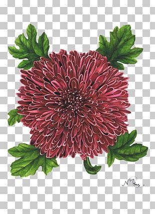 Chrysanthemum London Cut Flowers Art PNG