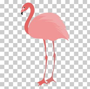 Flamingos Water Bird Animal PNG