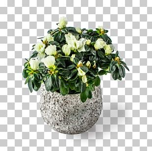 Cut Flowers Flowerpot Houseplant Flowering Plant PNG