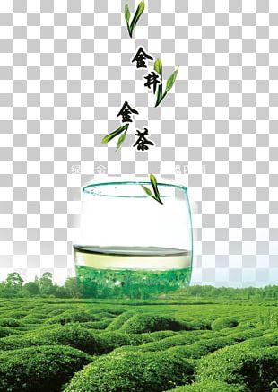 Green leaves, Green tea Tea tree oil Camellia sinensis, tea leaves, leaf,  tea, plant Stem png | PNGWing