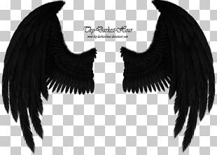 Bird Angel Wing American Crow Cherub PNG