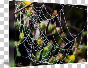 Spider Web Moisture Close-up PNG