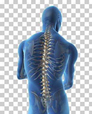 Vertebral Column Spinal Cord Human Back Human Body Spinal Stenosis PNG