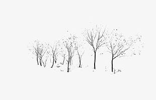 Winter Tree Material PNG