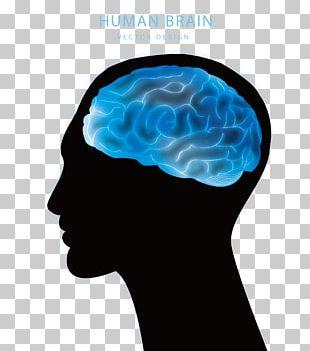 Blue Brain Project Agy Euclidean PNG