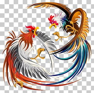 Cockfight Rooster Chicken Illustration PNG