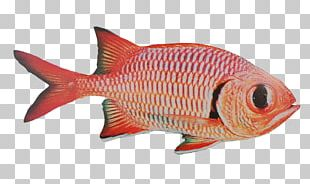 Fish Products Northern Red Snapper Seafood Fishing PNG