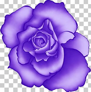 Beach Rose Flower Blue Rose Rosaceae PNG
