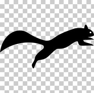 Skunk Raccoon Squirrel Canidae PNG