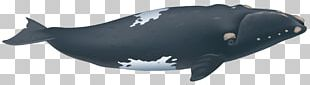 Southern Right Whale Porpoise North Atlantic Right Whale North Pacific Right Whale PNG