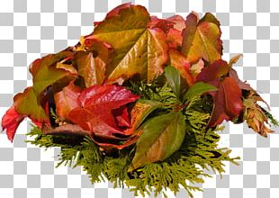 Autumn Leaves Blog PNG