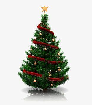 Green Christmas Tree PNG