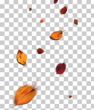 Leaf Autumn Petal Deciduous PNG