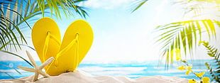 Summer Beach Vacation Background PNG