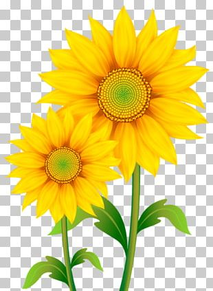 Portable Network Graphics Common Sunflower Open PNG