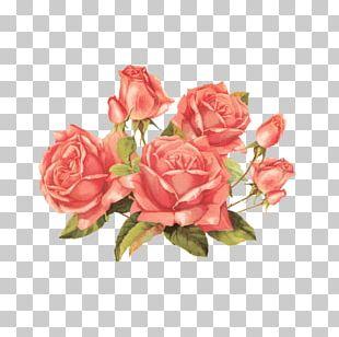 Rose Vintage Clothing Flower Antique PNG