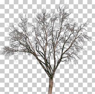 Tree Drawing Painting Silhouette PNG