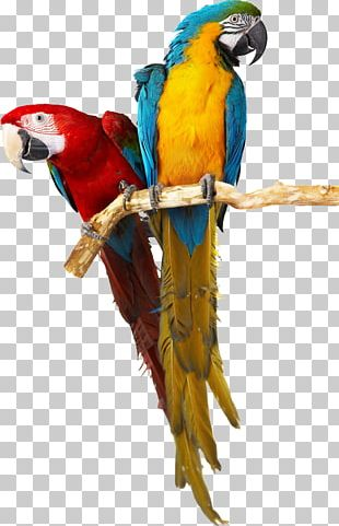 Parrot Bird Stock Photography PNG