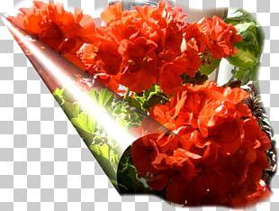 Cut Flowers Petal Dish Network PNG