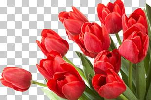 Flower Tulip Desktop PNG